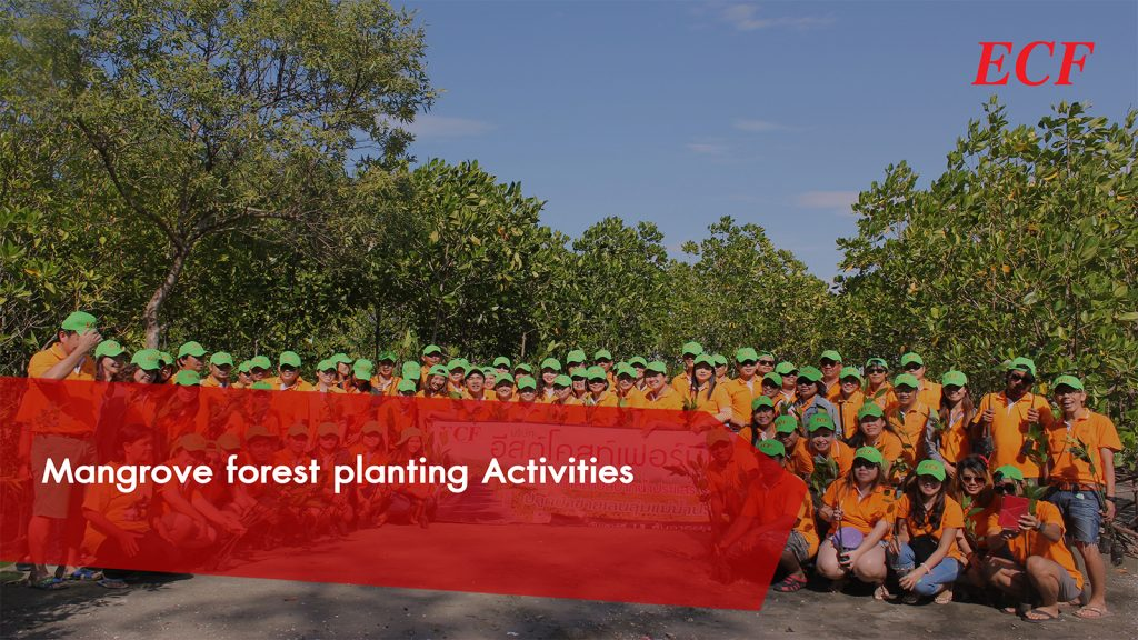 Mangrove forest planting Activities